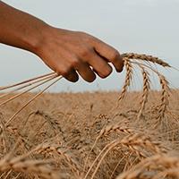 Grandes Moagens de Angola disponibilizam farinha e pão para populações carenciadas